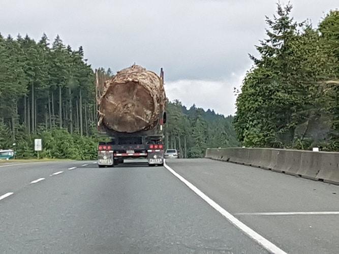 Murdered Old Growth Cedar Tree on Logging Truck